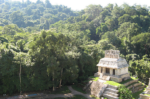 Palenque in Mexico jungle